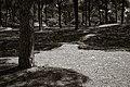 Bosque de Pinos en la Breña.jpg