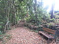 Bosque del Adelantado 3.JPG