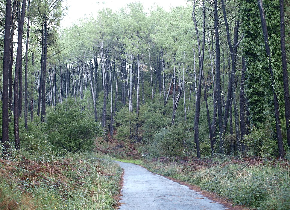 Bosque no Monte Carboeiro