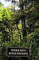 Bosque primario 11.jpg