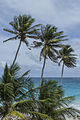 Bottom Bay Beach with Coconut trees.jpg