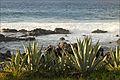 Boucan-Canot (Île de la Réunion) (4133754184).jpg