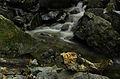 Boyana river.jpg