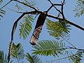 Branches d'arbres à Oasis Park.JPG