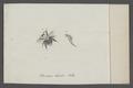 Bremus - Print - Iconographia Zoologica - Special Collections University of Amsterdam - UBAINV0274 046 03 0089.tif