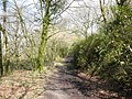 Bridleway, through the Rhododendron Wood, on North Hill - geograph.org.uk - 1774310.jpg