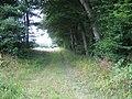 Bridleway past Benacre Wood - geograph.org.uk - 1426423.jpg