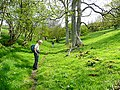 Bridleway to Sugarloaf (Y Fal) 3 - geograph.org.uk - 1298406.jpg