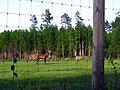 Briežu dārzs. Deer park. May, 2016 - panoramio.jpg