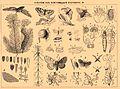 Brockhaus and Efron Encyclopedic Dictionary b4 610-3.jpg