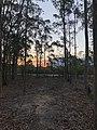 Bush Sunset.jpg