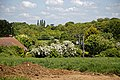 Bush Wood from The Stag, Little Easton, Essex, England 02.jpg