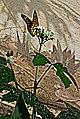 Butterfly, Biouniverzoo, Chetumal. - panoramio.jpg