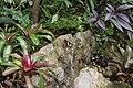 Butterfly Rainforest FMNH 37.jpg