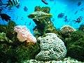 Cá biển Nha Trang 3.jpg