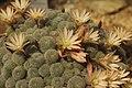 Cactus (41352712425).jpg