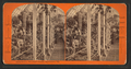 Cactus Rockery, Woodward's Gardens, San Francisco, Cal, from Robert N. Dennis collection of stereoscopic views.png