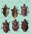 Cahara type specimens - ZooKeys-319-037-g003.jpeg