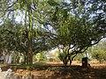 Calicut university.jpg