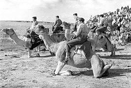 Camels in IDF Service. V.jpg
