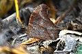 Camouflage king.jpg