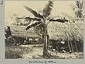 Caraïbendorp bij Albina, Suriname Caräibendorp bij Albina (titel op object), NG-1994-65-2-22-1.jpg