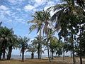 Carabane-Palmiers.JPG