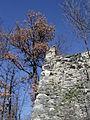 Carpineti Mandra resti torre castello.jpg