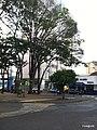 Centro, Franca - São Paulo, Brasil - panoramio (88).jpg