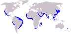 Long-beaked common dolphin range
