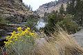 Chamisa shrub, Steelhead Falls (15291798315).jpg