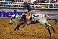 Championship Rodeo '16.jpg