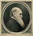 Charles Robert Darwin. Wood engraving. Wellcome V0001467.jpg