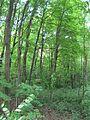 Chemin de Senneville 11.JPG