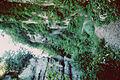 Chemin des Gorges du Guiers Vifs.jpg