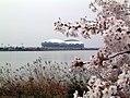 CherrySprays and BigSwan.jpg