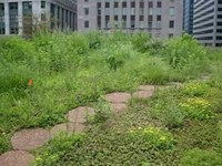 File:Chicago City Hall Rooftop Gardens.webm