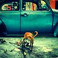 Chihuahua orinando un Bochito -igdaily -streetphotography -mexico -iphononly -picoftheday -instagramers -mextagram -all shots -iphonography -iphonesia -instagrameando -animals -dogs (7306325046).jpg