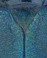 Chloridolum nadleri Skale, 2018 TYPE Scutellum (24110336478).png