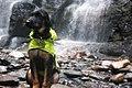 Christman Sanctuary with Dog.jpg