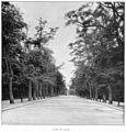 Clément Maurice Paris en plein air, BUC, 1897,079 L'Allée des Acacias.jpg