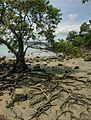 Coconut Beach 3.jpg