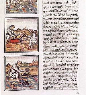 Florentine Codex - Page 51 of Book IX from the Florentine Codex. The text is in Nahuatl; World Digital Library.