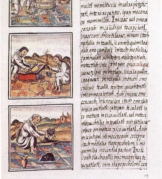 Codex florentino 51 9