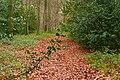 Coldmoor Wood - geograph.org.uk - 1049207.jpg