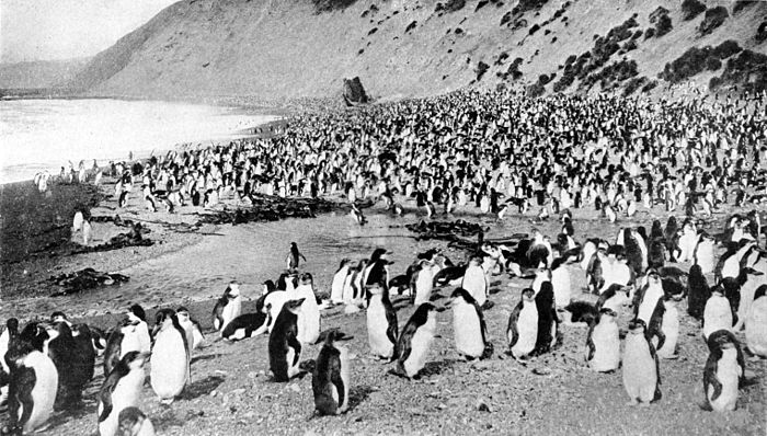 Collier's 1921 Penguin - Antarctic beach.jpg