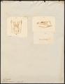 Coluber canus - 1700-1880 - Print - Iconographia Zoologica - Special Collections University of Amsterdam - UBA01 IZ12100299.tif