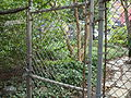 Community garden behind chain-link fence (Manhattan, 2008).jpg