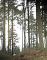 Coombs Wood - geograph.org.uk - 748352.jpg