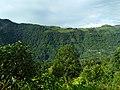 Coonoor landscape tea plantations and forest.jpg